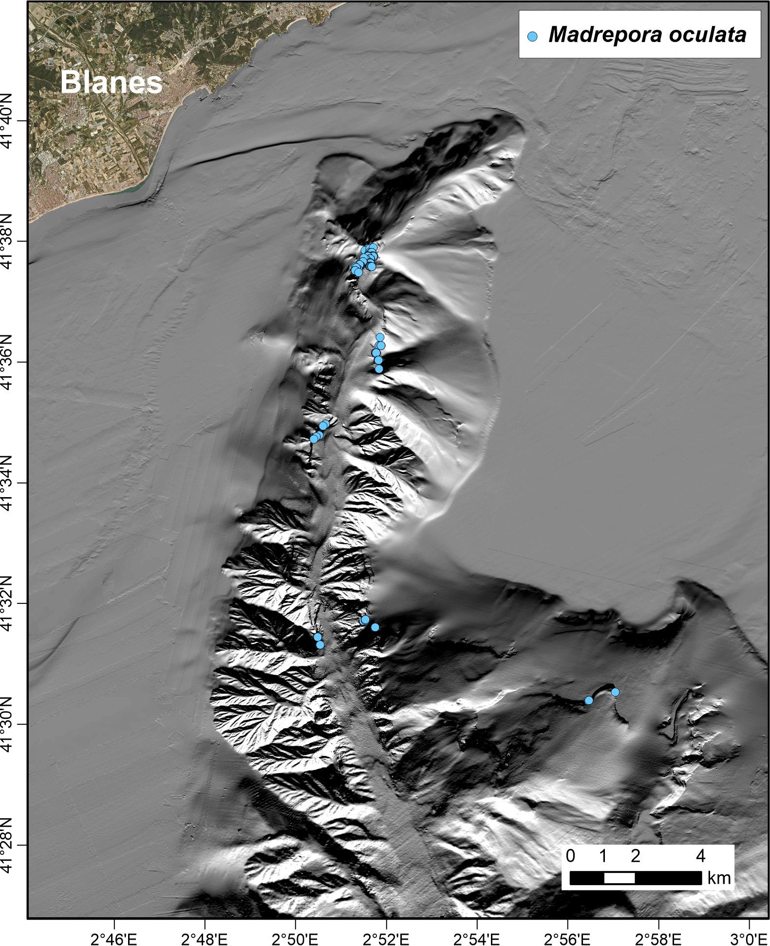 Mapa batimètric del Canyó submarí de Blanes